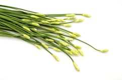 A bunch of garlic chives Royalty Free Stock Photos