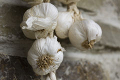 Bunch of garlic hanging on wall Royalty Free Stock Photo