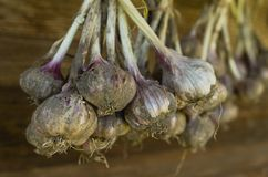 Bunch of garlic hanging on the wooden wall Royalty Free Stock Image