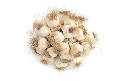 Bunch of garlic isolated on white Royalty Free Stock Photo