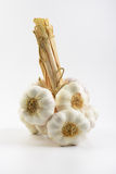 Bunch of garlic Royalty Free Stock Photography