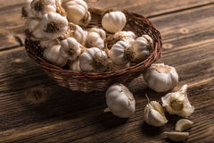 Bunch of garlic Royalty Free Stock Image