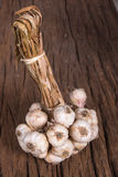 Bunch of garlic Royalty Free Stock Photos
