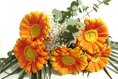 Bunch of gerbera flowers Stock Images