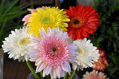 Bunch of Gerbera flowers Royalty Free Stock Photography