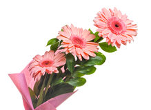 Bunch of gerbera isolated Stock Photography