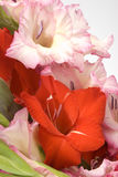 The bunch of gladiolas Royalty Free Stock Photos