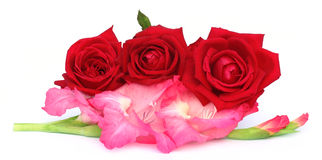 Bunch of gladiolus and red rose Stock Photos