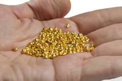 A bunch of gold pellets on the palm. Isolated on white background. Selective focus royalty free stock image