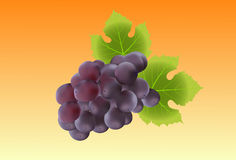 Bunch of grape Royalty Free Stock Image