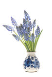 Bunch of grape hyacinths in a delfts blue vase Royalty Free Stock Images