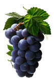 Bunch of grape with leaves, paths Stock Photography