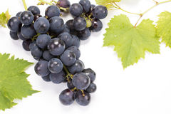 Bunch of grape Royalty Free Stock Photos