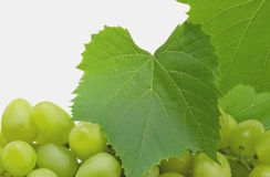 Bunch Grapes Royalty Free Stock Images