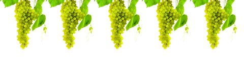 Bunch of grapes Stock Photography