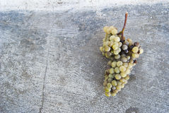 Bunch of grapes. To form the African continent Stock Image