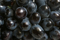 Bunch of grapes Royalty Free Stock Image