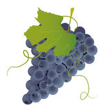Bunch of grapes. On the white background Royalty Free Stock Photos
