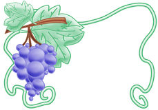 Bunch of grapes. Green bunch of grapes. clipping path included Stock Image