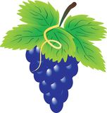 Bunch of grapes Stock Image