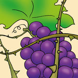 A bunch of grapes. Illustration of a beautiful bunch of grapes. Useful also for educational books for kids. You can find other illustrations like this in my Stock Photography