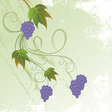 Bunch of grapes. On grunge background Royalty Free Illustration
