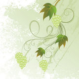 Bunch of grapes. With place for text Stock Illustration