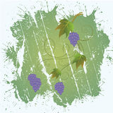 Bunch of grapes. Background with bunch of grapes Royalty Free Stock Image