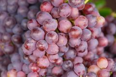 Bunch of grapes. Asian tropical fruits for sale.  Stock Image