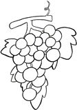 A bunch of grapes b/w. The bunch of grapes in black and white Royalty Free Stock Photography