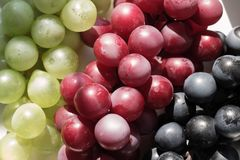 Bunch of grapes close-up on a white background, place for text stock photo
