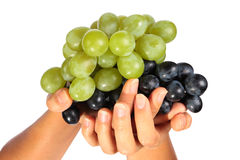 Bunch of grapes in female hand Royalty Free Stock Photography