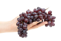 Bunch of grapes in female hand. Isolated. Stock Image