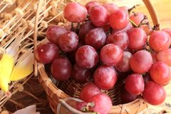 Bunch of grapes fruit  juicy fresh delicious. Stock Photos