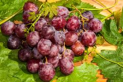 Bunch of grapes. Grapes are a genus of plants in the family Vitaceae Stock Image