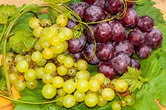 Bunch of grapes,. Grapes are a genus of plants in the family Vitaceae Royalty Free Stock Photography