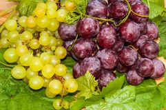 Bunch of grapes,. Grapes are a genus of plants in the family Vitaceae Stock Images