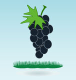 Bunch of grapes. Grass concept, grass concept royalty free illustration