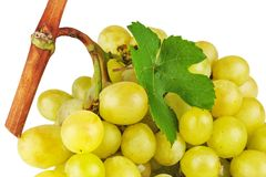Bunch of grapes with green leaf. Isolated on white background Stock Photos
