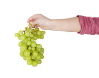 Bunch of grapes in hand Royalty Free Stock Image