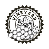 Bunch of grapes icon. Seal stamp with bunch of grapes icon over white background. vineyard concept. vector illustration Stock Photo