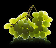 Bunch of grapes isolated Royalty Free Stock Images