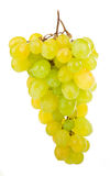 Bunch of grapes. Grapes isolated on white background Royalty Free Stock Image