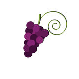 Bunch of grapes isolated on white background. Winemaking. Logo vineyards or shop. Logo grapes. Royalty Free Stock Photography