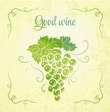 Bunch of grapes for label wine Royalty Free Stock Photos