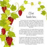 Bunch of grapes for label wine or other. Grapes pattern page in green Royalty Free Stock Photography