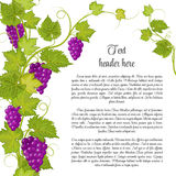 Bunch of grapes for label wine or other. Grapes pattern page in green Stock Photography