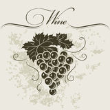 Bunch of grapes for labels of wine. For bottle Stock Images