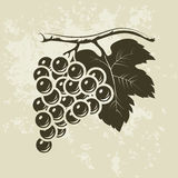 Bunch of grapes for labels of wine. For labels, pack Vector Illustration
