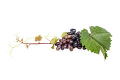 Bunch of grapes with leaf Royalty Free Stock Photos